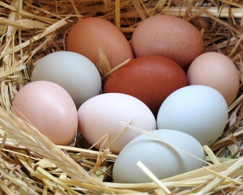 jenis telur